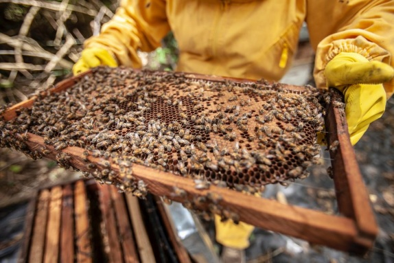 A close up photo of a beekeeper holding a beehive